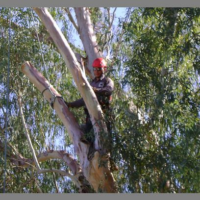 Tree Installation, Trimming, Pruning and Removals