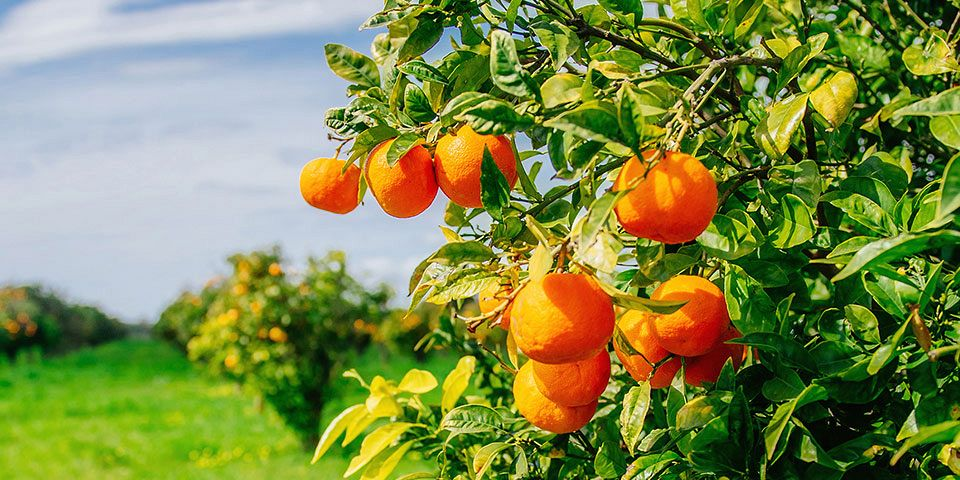 8 Essential Tips for Caring for Fruit Trees in Arizona
