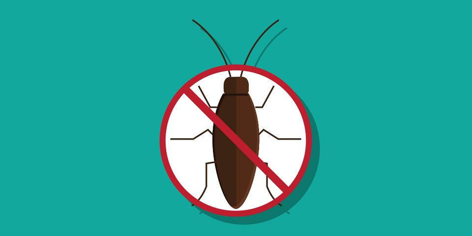 DIY Pest Control Ideas and Remedies