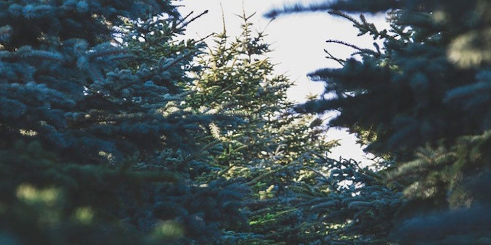 Top 10 Places to Get Your Christmas Tree in Arizona